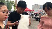实拍焦作狗市,卖1000块的英短猫,你猜流到狗贩子手里多少钱?