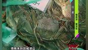 南京高淳水产批发市场,老板每天收的螃蟹量惊人!螃蟹个头也不小