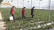 潍坊青州: 巾帼居家创业贷 助力女性创业成功