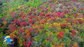 层林尽染,色彩斑斓!初冬的枣庄山亭宛若一幅水彩画