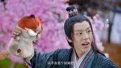 报告王爷,王妃是只猫第一季,第一集续