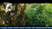 [中国电影报道]科林·费斯助阵《秘密花园》再登大银幕