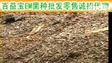 EM菌发酵鸭粪便制作生物有机肥技术视频