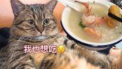 【肥弟】up晚餐海鲜砂锅粥/小猫咪晚餐15g猫粮(在汕头一锅正宗的潮汕砂锅粥要多少钱?)