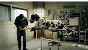 第71届戛纳电影节的影帝桂冠《犬舍惊魂》官方HD预告来了--意大利导演马提欧·加洛尼的作品