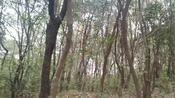 实拍湖北省荆门市,东宝山森林公园春天美景.