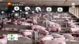 养殖场户注意了!农业农村部部署2019年畜牧兽医重点工作