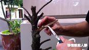 高手制作树桩舍利干造型,雕刻机与各类工具轮番上阵,舍利好有型