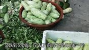 广西贵港:木瓜丝收购价低至5元一斤,80后小媳妇劝不要盲目跟风!