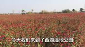安徽省铜陵市西湖湿地公园