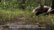 荒野求生3:贝尔捕获超级鳄鱼,全程惊险,竟要拿回去烤着吃