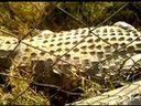 卢萨卡 鳄鱼农场 lusaka crocodile farm
