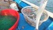 阿忙老爹加急赶制排钩,做完连夜出海放钩,钓起几十斤海货大丰收
