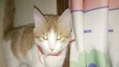 猫:洒家名曰 尼古拉斯金刚狗剩子!!!~~~