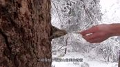 看过峨眉山的雪景,你会发现,所有的冬天都将成为将就