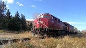 【超近距+内燃120节货运动集(没有动集!)+全速通过!!!】 震撼!加拿大太平洋铁路卡尔加里Edworth Park道口列车全速通过