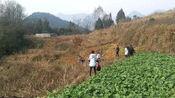 贵州遵义:每年过完年都会去上香,跑几公里路