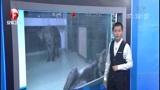 [超级新闻场]日本 动物园搞乌龙 将两雄狼关一起让其生育          弹窗  关灯