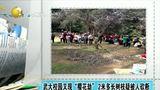 """[说天下]武大校园又现""""樱花劫"""" 2米多长树枝疑被人砍断"""