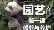 毁树 | 宝妹展现园艺天赋(大熊猫宝兰的账单)20191123