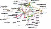 5扩展关键词矩阵与频次+Citespace+ucinet+pajek+vosviewer+gephi+bbexcel+bicomb+共文献计+聚类分析+知识图谱