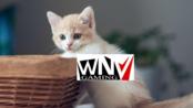 【CSGO】【wNv.Mr.Mao】2017-07-11 直播录屏 和QKA/xixi/迪总打5E~