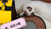 一只猫想把垫子下面的磨牙棒拿出来需要多久?大家快来康康这只猫好像不太聪明。。。