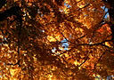 秋天夕阳照耀下的红叶·编码:INTB298