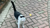 上班路上偶遇拦路小猫咪ヾ(■_■)ノ