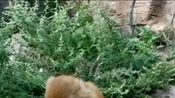 动物园里幸福的一家三口,单身狗们羡慕吗?