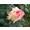 山西辽代应县千年木塔-2018.6.5-生活-高清完整正版视频在线观看-优酷