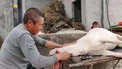 运往郑州的带皮羊肉多少钱一斤?农村大叔亲口告诉你,你觉得贵吗
