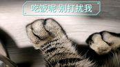 【狸花】给新来的小屁猫加餐(治疗颈椎病)