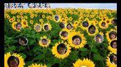 向阳花爱心会2009年第一届大学生暑期义务支教留念