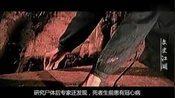 湖南出土墓葬,惊现千年不腐女尸,体内138颗西瓜子道出其死亡真相