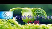 【获奖】华东师大版八年级科学上册第四章 植物的物质和能量的转化第二节 水在植物体中的代谢-洪老师优质公开课教学视频(配课件教案)