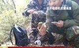 [中国新闻]陕西:安康宁陕再次拍到野生大熊猫