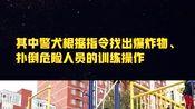 北京通州警方举行警营开放日看特警执行任务,与警犬亲密接触