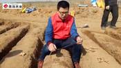 思远农业魏凡凯到威海乳山实地指导姜农大姜种植技术
