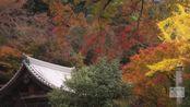 83. [4K] 三室戸寺 京都の紅葉 京都の庭園 Mimuroto-ji Temple Autumn leaves The Garden of Kyoto