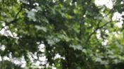 【出簪出簪出簪】重要的事说三遍,期末要搬宿舍了,堆了一堆簪子卖不掉,图上标注的价格可小刀,非偏远邮费五元,qq群286178029,进群减两元,送小发钗。