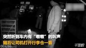 【湖北】咸宁高速客车行李仓 居然藏两头活野猪-湖北资讯-湖北新鲜事