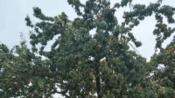 河北省邯郸市丛台公园看到壮观的一幕-旅游-高清完整正版视频在线观看-优酷