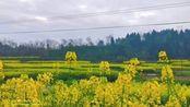 四川省遂宁市安居区西眉镇旅游视频《春之韵、国之强、毒之灭、民