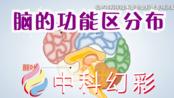 脑的功能区分布科学科研原理仪器动画-中科幻彩制作