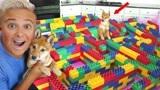 老外用积木制作简易迷宫,狗狗多久才能走出来呢?好戏开始了!