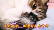 【猫被撸的日常】当代猫咪过年的现状
