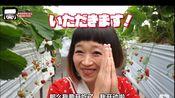 大胃王系列---俄罗斯佐藤.草莓园50分钟吃了16米长.你这是摘还是吃?..(日本草莓都这么种的吗?)
