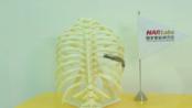 "【Renishaw AM】 雷尼绍金属3D打印技术帮助""国研院""仪科中心推动医疗产业创意与发展_bilibili"