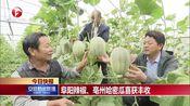 [安徽新闻联播]阜阳辣椒、亳州哈密瓜喜获丰收